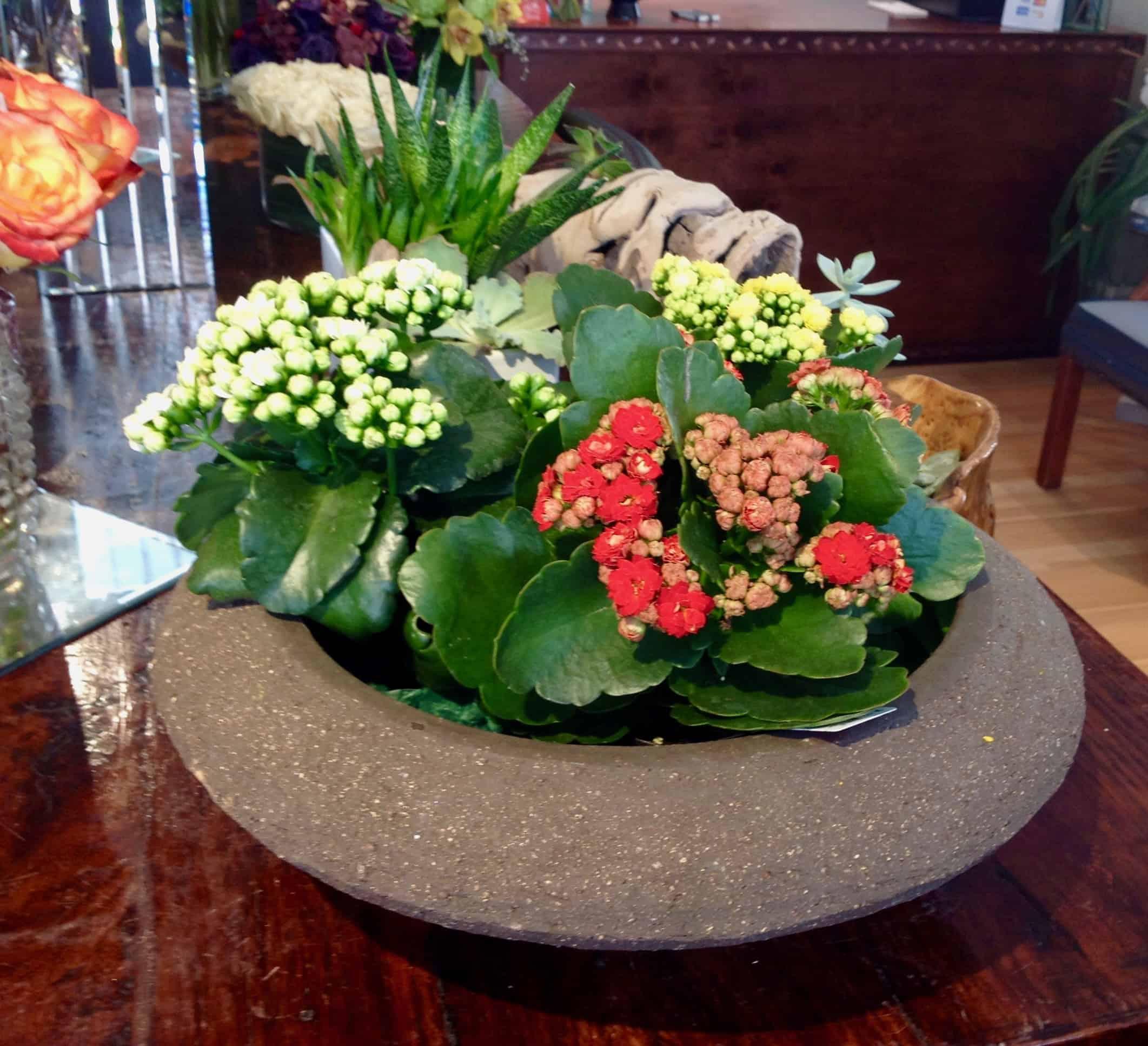 Kalanchoe Dish Garden Plant Verdant Floral Studio